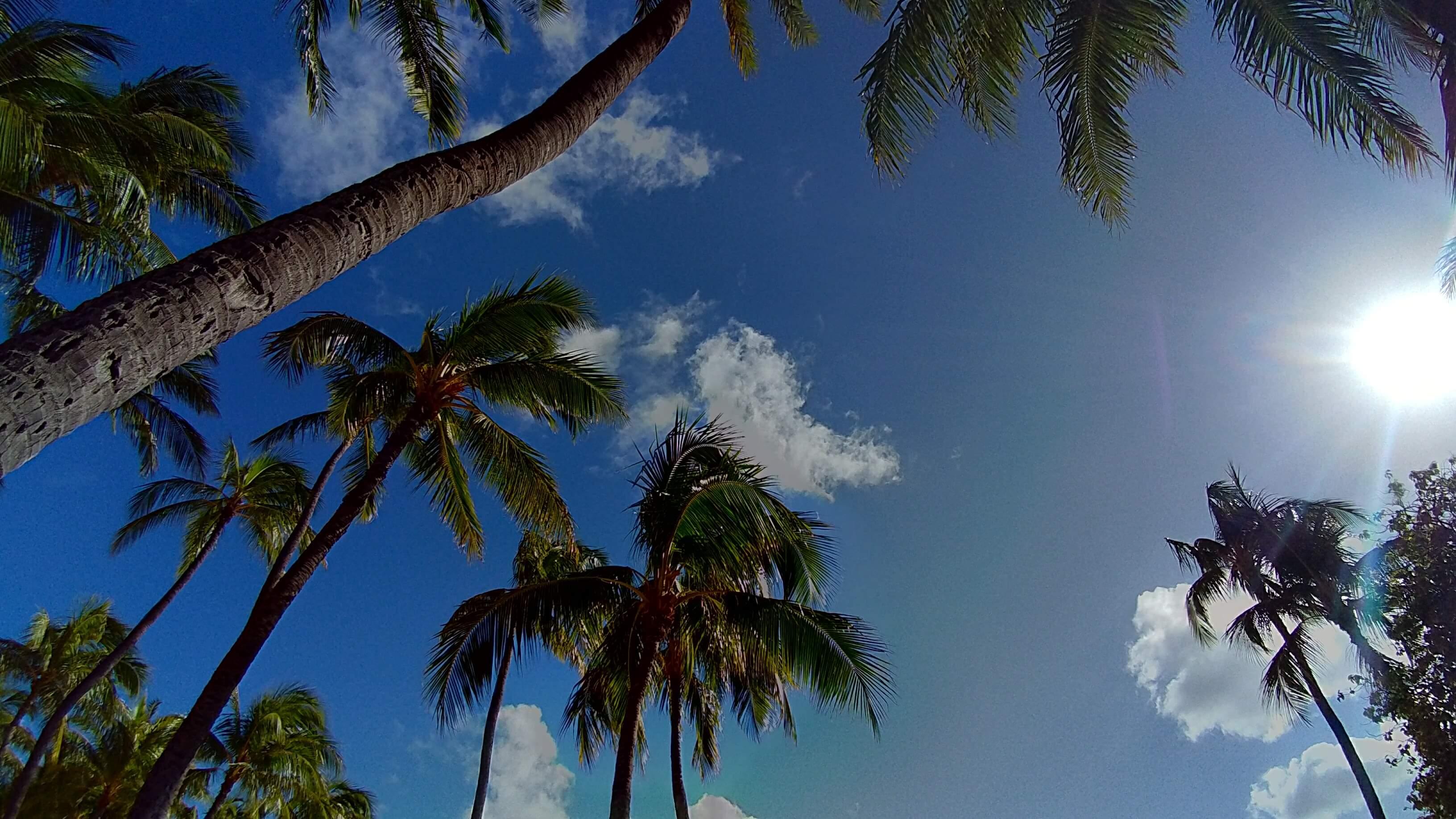 ハワイ編〜ネットビジネスで人生を変える自由への道〜
