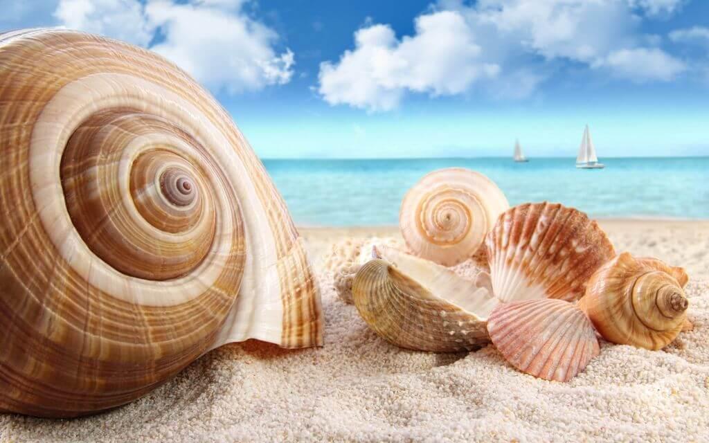 Seashells-Beach-Sea