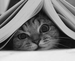 ネコ親子の習慣