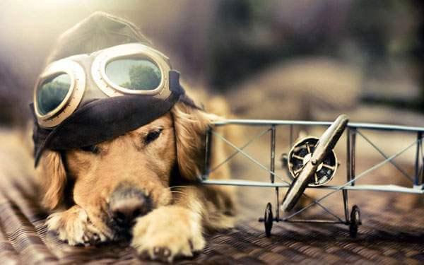 wallpaper-beautiful-dog-01